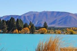 Culture NZ - Culture in New Zealand