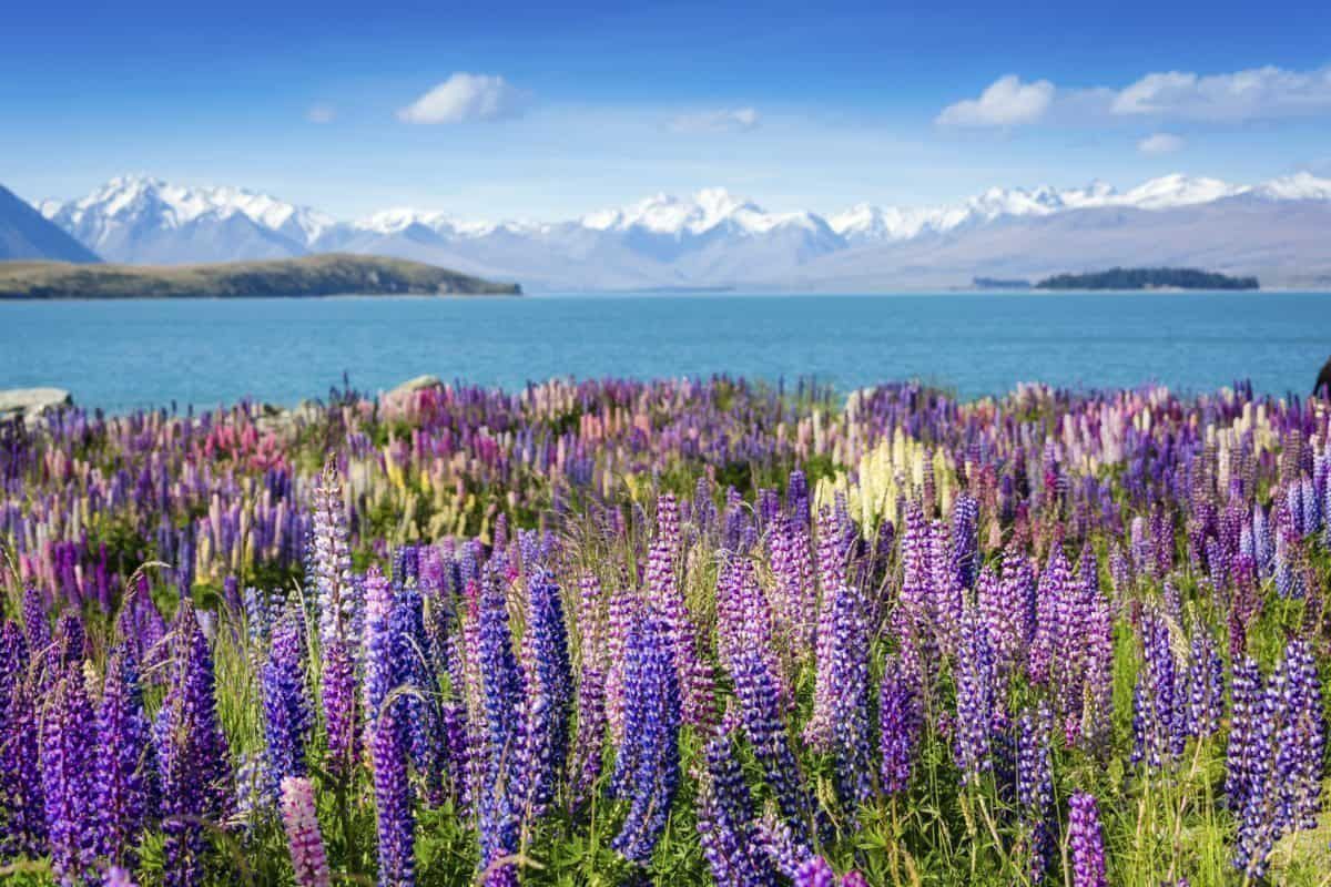 Go to New Zealand with us